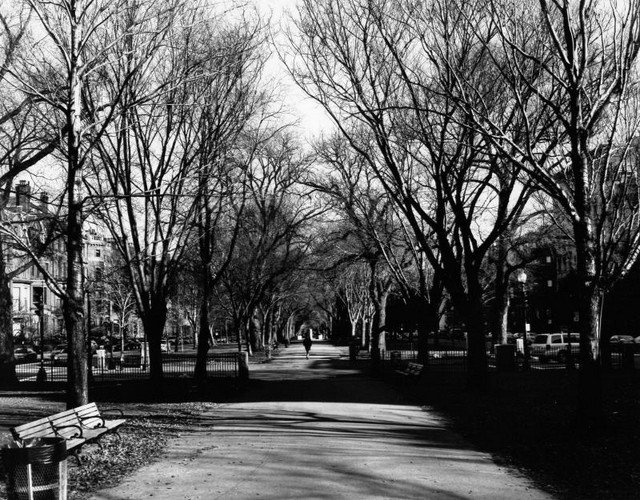 Commonwealth Avenue Mall, Boston, MA. -- print from 4x5 TXP negative  (December, 2003)